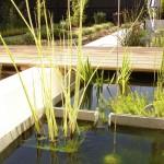 trough planting
