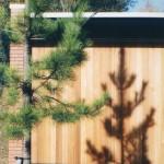 Helenswood Conifer